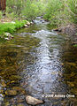 Trout creek 02 Tulare.jpg