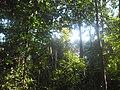 U tropskoj prašumi u Kambodži.jpg