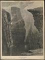 Uria troile - 1874 - Print - Iconographia Zoologica - Special Collections University of Amsterdam - UBA01 IZ17800297.tif