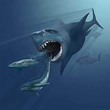 A painting of a megalodon about to eat two small whales. The mouth is open, and two rows of teeth are visible only on the bottom jaw. There are two other sharks in the background.
