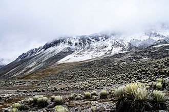 Alpine tundra - Alpine tundra in Venezuelan Andes