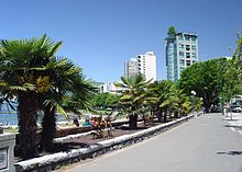 A sidewalk lined with lights and palm trees. Opposite the street are benches where people sit and watch the bay. In the distance are high-rise buildings, including one with a tree growing on its roof.