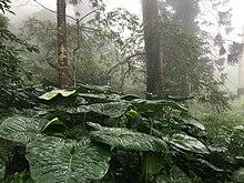 Растительность на холмах Нанди