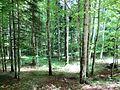 Velebit Forest.jpg