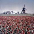 Vergezicht met molen - Berkmeer - 20363872 - RCE.jpg