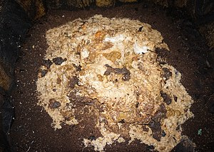 Vermifilter - Primary treatment domestic vermifilter with solids pile on surface (comprising feces and toilet paper) sitting on vermicast humus substrate (1m2 surface area)