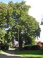 Verne-Linde vor der Kirche.jpg