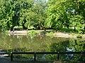 Vernon Park Lake - geograph.org.uk - 16363.jpg