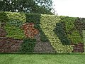Vertical Garden from Lalbagh flower show Aug 2013 8781.JPG