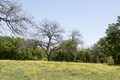 View of Johnson Nature Park in Lampasas, Texas LCCN2014633152.tif