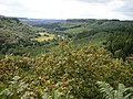 View of Newtondale from the top of Killing Nab Scar - geograph.org.uk - 538091.jpg