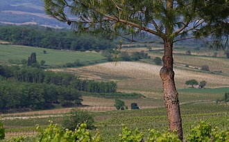 Limoux wine - Limoux Vineyard