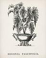 Vintage illustrations by Benjamin Fawcett for Shirley Hibberd digitally enhanced by rawpixel 65.jpg