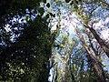 Vista alberi monimentali.jpg