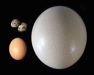 Egg as food - Quail eggs (upper left), chicken egg (lower left), and ostrich egg (right).