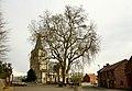 Vrijheidsboom , opgaande plataan - 375263 - onroerenderfgoed.jpg