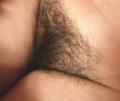 Vulva 1a.png