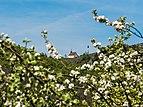 Walberla-Kapelle-Blüten-P5063296-PS.jpg