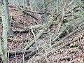 Wald - panoramio (8).jpg