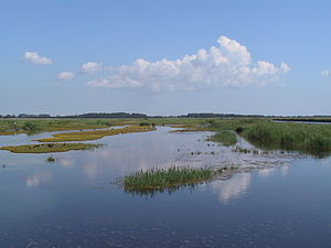Wallnau Waterbird Reserve - View from the Eck-Haid (hide) looking northeast