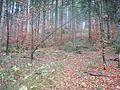 Wanderung im November - panoramio (9).jpg