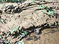 Water tracks.JPG