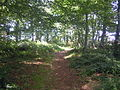 Weavers Way Felbrigg 29 July 2014.JPG