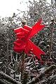 Weihnachtsbaum mit roter Dekoschleife.jpg