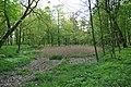 Widok na zarośnięty staw.JPG