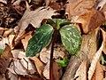 Wildflowers P4100087.JPG