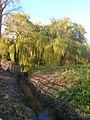 Willows near Bury Wharf - geograph.org.uk - 1020422.jpg
