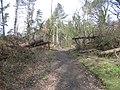 Wind blown trees at Gwysaney - geograph.org.uk - 736097.jpg