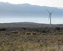 Three sheep in a rocky plateau, with a wind turbine and mountains in the background