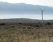 Rüzgar türbini ve arka planda dağlar olan kayalık bir platoda üç koyun