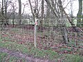 Wire fence in Rudgwick, West Sussex, England.jpg