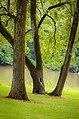 Wishbone Tree.jpg