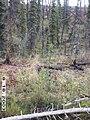 Wolf Survey, Denali, 2003 (885013ac-80f5-412a-9314-aabc8074860c).jpg
