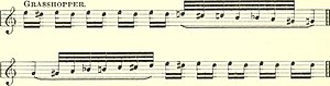 Insects in music - Grasshopper stridulation in musical notation in Simeon Pease Cheney's Wood Notes Wild, 1892