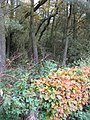 Woodland, Greenshields - geograph.org.uk - 273135.jpg