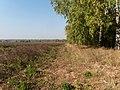 Yaroslavsky District, Yaroslavl Oblast, Russia - panoramio (76).jpg