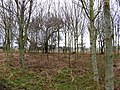 Young woodland, Hutton Hall - geograph.org.uk - 338289.jpg