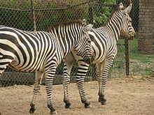 Исламабадский зоопарк — Википедия
