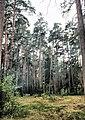 Zhukovskiy, Moscow Oblast, Russia - panoramio (36).jpg