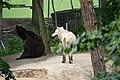 Zoo Tábor-Větrovy, medvěd, vlk 01.jpg