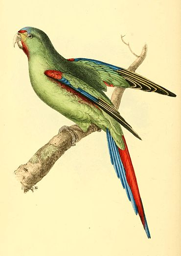 Zoological Illustrations Volume I Plate 62.jpg