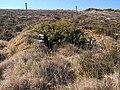 """Wind trees"", Muingelly - geograph.org.uk - 1881642.jpg"