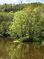Örekilsälven downstream from Kviström in Munkedal 4.jpg