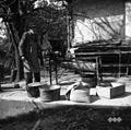 Čandrov oče Mikec Franc, Sv. Vrh, čisti žito s čistilnikom 1951.jpg
