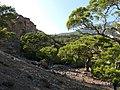 Πευκόδασος στην περιοχή Μονής Κουδουμά.jpg