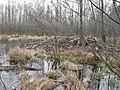 Бобровые хатки - panoramio.jpg